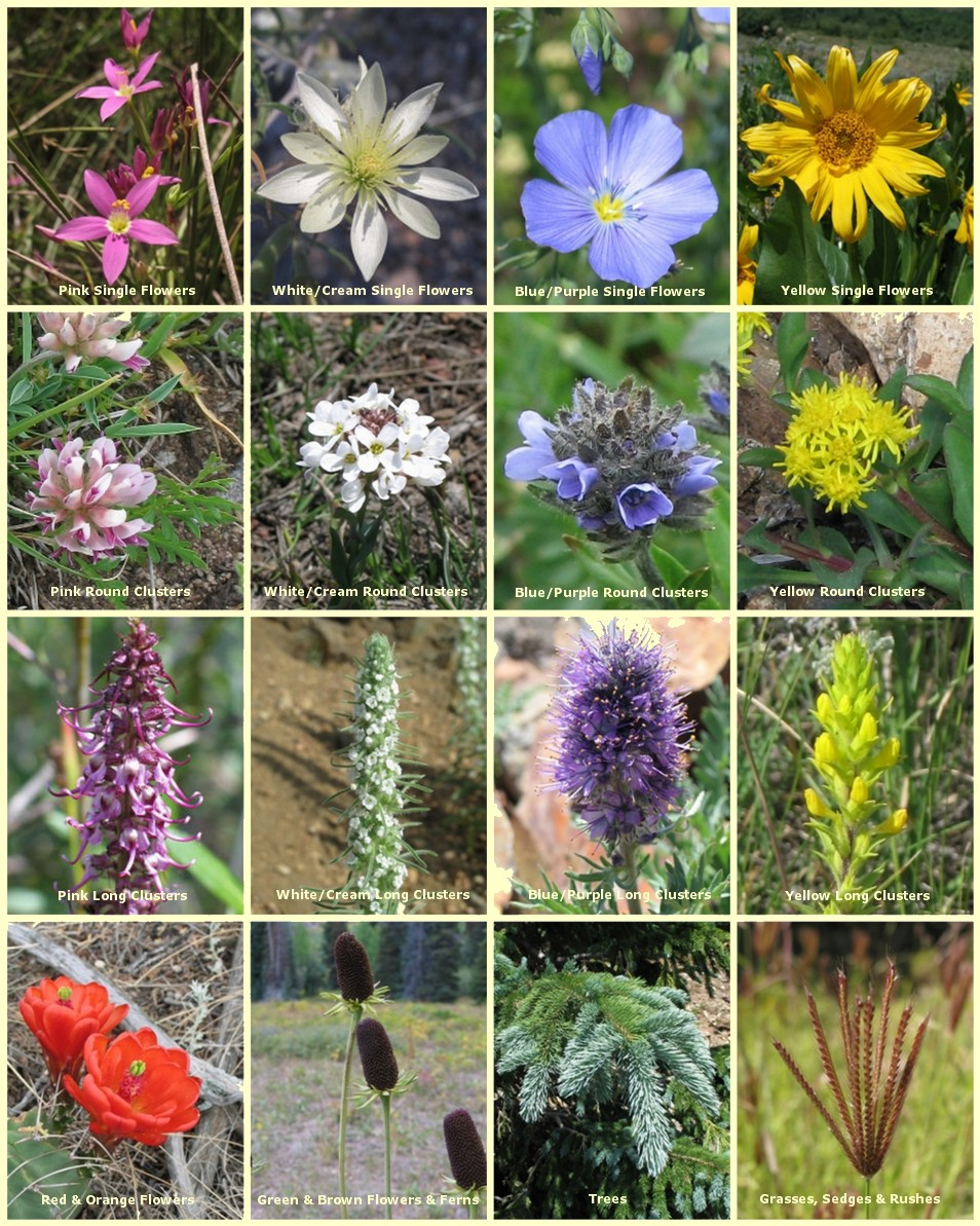 Wildflowers Of The Southern Rocky Mountains A Guide To The Flora Of Colorado And New Mexico